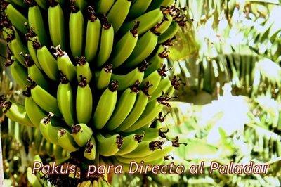Indicación Geográfica Protegida Plátanos de Canarias y D.O. Papas Antiguas de Canarias