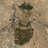 Este polen fósil encontrado en el estómago de una mosca tiene 47 millones de años