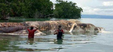 Ha aparecido una misteriosa criatura putrefacta en las costas indonesias e Internet está alucinando