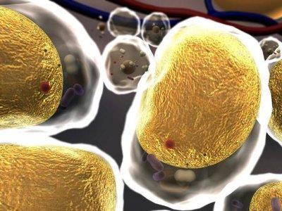 Todo lo que tienes que saber sobre el colesterol: por qué no es tan malo como pensamos