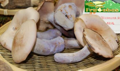 Todas las variedades de setas comestibles en Frutobos