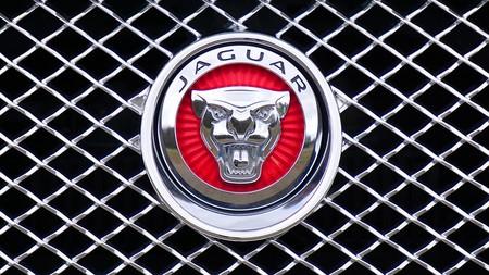 Jaguar 1660955 960 720