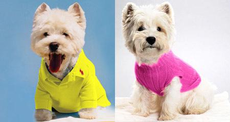 Ralph Lauren colección para perros
