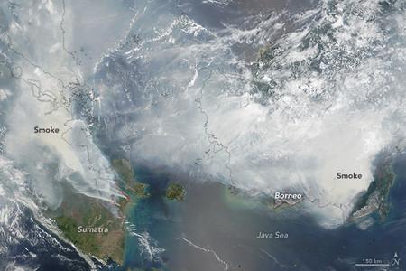 Borneo Tmo 2015267