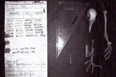 Cuando el mejor cifrado tiene setenta años de antigüedad: el caso de la paloma mensajera 40TW194 [Actualizado]