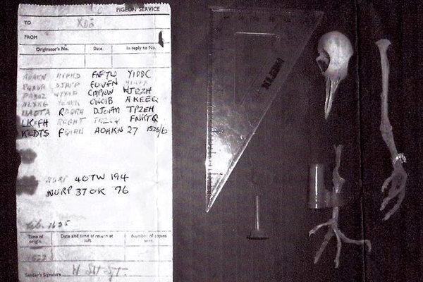 paloma mensajera mensaje cifrado 40TW194