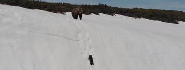 La historia del osezno que escala una pared de hielo es en realidad una pesadilla hecha drone