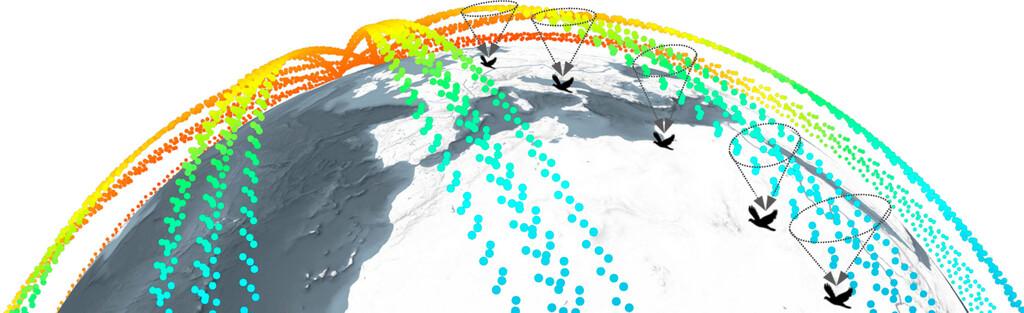 Una nueva herramienta permite conocer la intensidad del campo magnético en cada punto de la migración de un animal