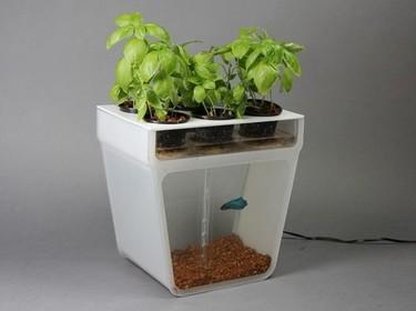 ¿Un huerto urbano en la pecera? Home Aquaponics