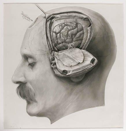 Nuestro cerebro elige por nosotros un poco antes que nosotros