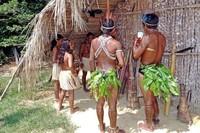 Los investigadores piensan realizar el seguimiento de las tribus amazónicas a través de Google Earth