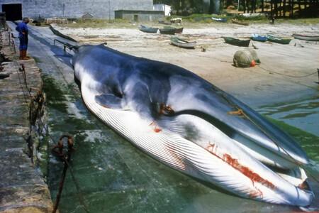 La historia de la última ballena cazada en España, el 21 de octubre de 1985