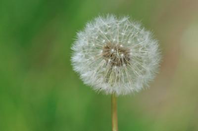 Algunas pautas a tener en cuenta si tenemos alergia y practicamos deporte