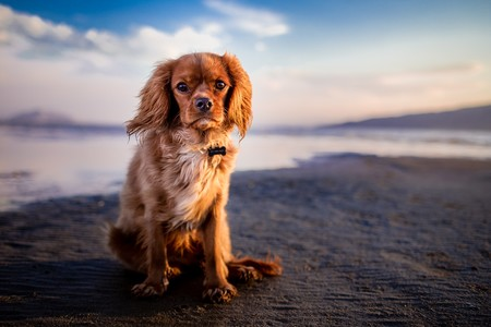 perro-playa-mar