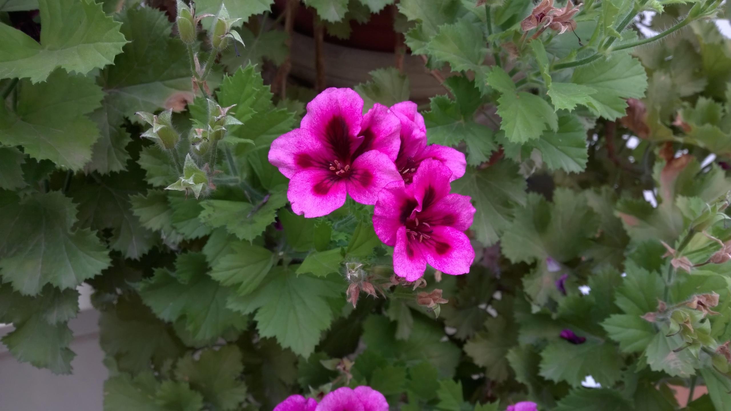 Foto de Nokia Lumia 930 muestras (4/16)