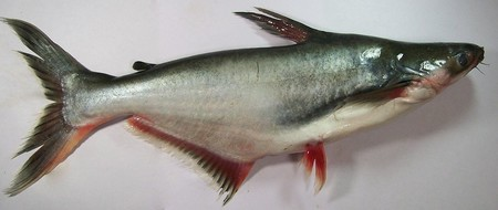 Panga: el pescado más polémico de los últimos tiempos