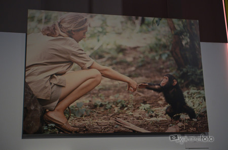 Expo National Geographic 04