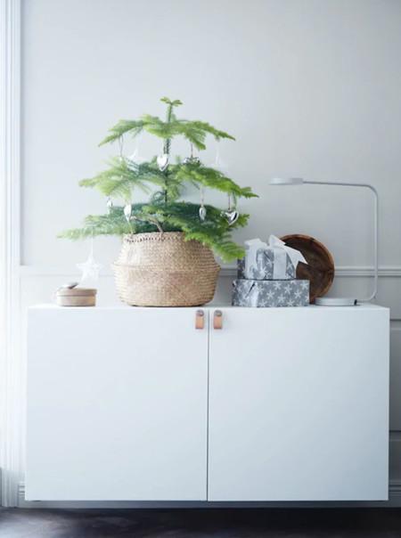 Plantas Txiis
