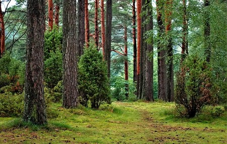 Bosque 6