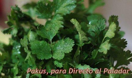 El cilantro. Su utilización en la cocina