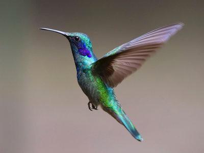 La ingeniería adaptativa de los pájaros: de placas solares naturales, radares especializados y arquitectura para volar