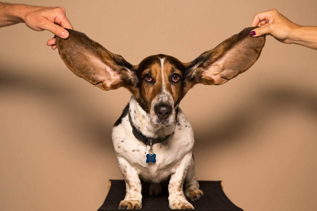 Nuestros oídos guardan un