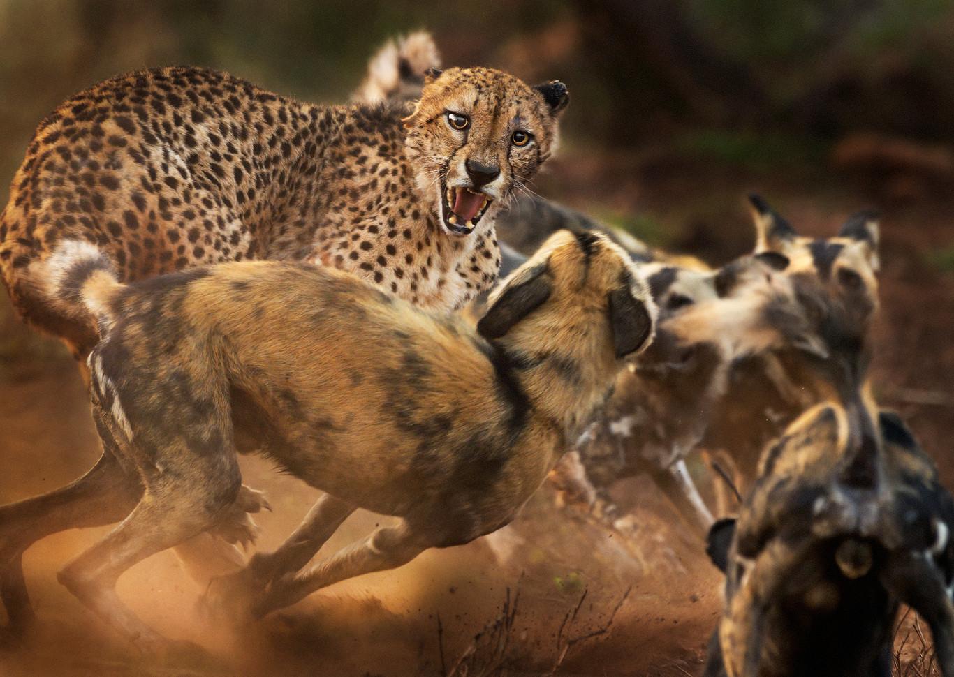 Estas son algunas de las espectaculares imágenes finalistas del concurso Wildlife Photographer of the Year 2019