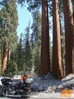 En moto por el Oeste Norteamericano (4): El día de los árboles gigantes