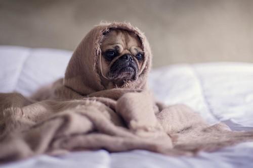 Cuántas horas necesitas dormir, dependiendo de tu edad, para conseguir un descanso reparador