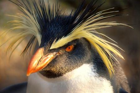 El contagio de enfermedades de humanos a animales puede haber llegado a la Antártida debido a las investigaciones y al turismo