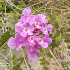 Foto 6 de 35 de la galería xiaomi-redmi-note-9-pro-galeria-fotografica en Xataka