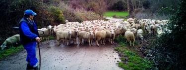 La España vaciada saca pecho en la pandemia: el sector agroalimentario y los menores contagios refuerzan la economía rural