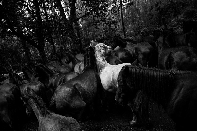 Foto de Daniel Rodrigues (9/11)