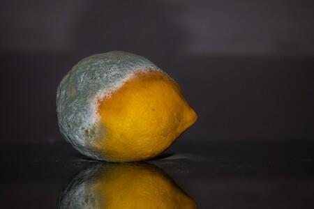 Qué es el moho o hongos en los alimentos, porqué sale y cómo evitarlo