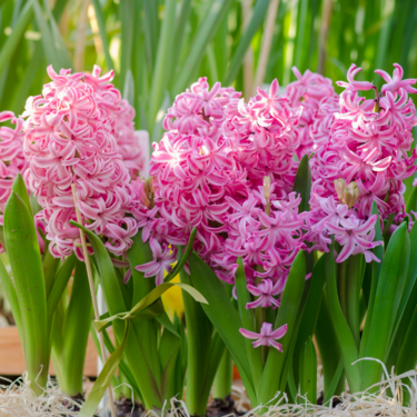 La primavera es la época de las flores: además de tenerlas en casa, te recomendamos donde verlas en todo su esplendor