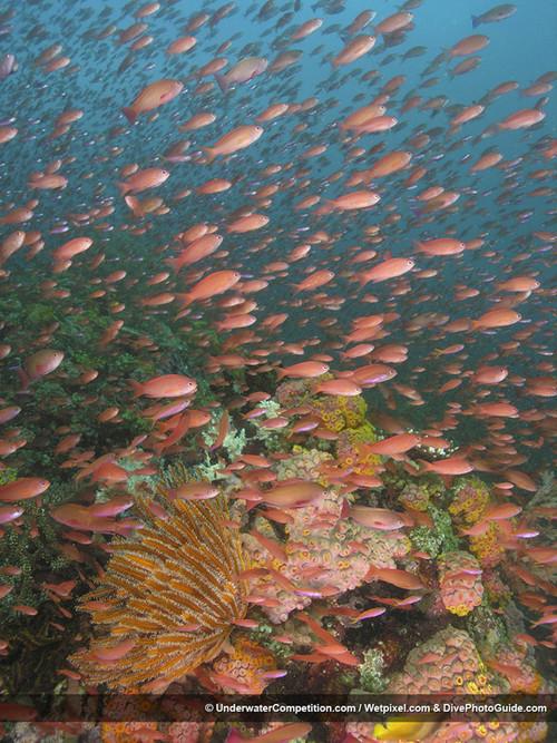 Foto de Underwater competition (30/34)
