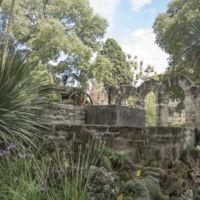 El Jardin des Plantes de Montpellier, o cómo visitar 2.000 especies de plantas