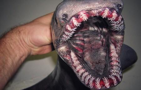 Nuestras peores pesadillas se hacen realidad gracias a los terroríficos animales de este pescador ruso