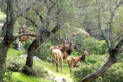Llega la berrea y estos son los mejores lugares para disfrutar de este impresionante espectáculo natural