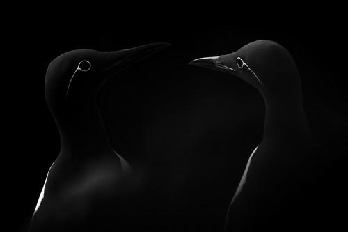 Estos son los ganadores de los Sony World Photography Awards 2019 en las categorías Open y National