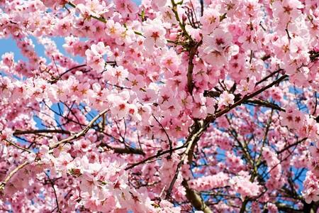 Resultados sin esfuerzo: practica desde ahora 6 carreras de fondo y tendrás una primavera estupenda