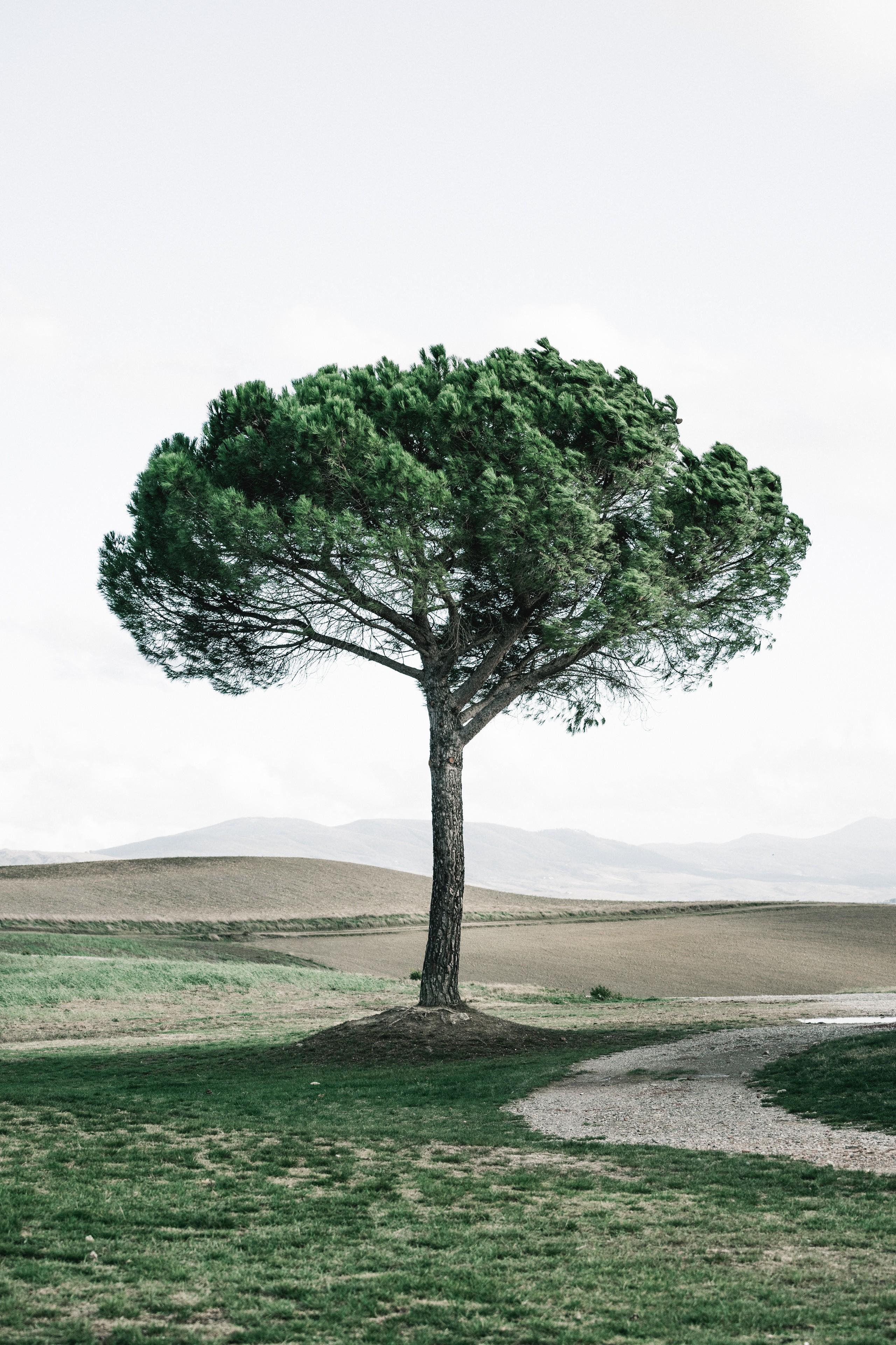 Foto de Fondos de árboles y flores (1/11)