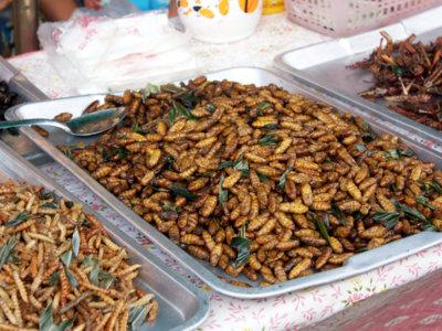 Insectos, ¿las proteínas del futuro?