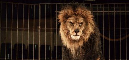 """Animales en las pantallas, """"animaladas"""" de Telecinco o cómo no ser un animal en televisión"""