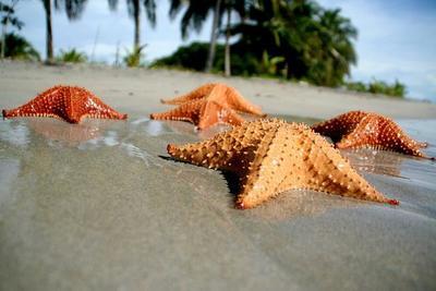 La Playa de las Estrellas en Bocas del Toro, Panamá
