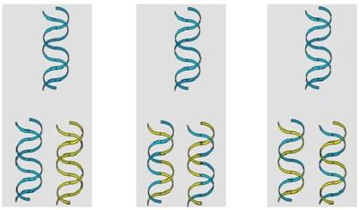 ¿Es posible modificar el ADN con el ejercicio?
