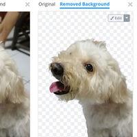 Cómo borrar el fondo de una foto fácil y gratis con Remove.bg para Android