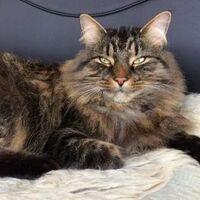 Si entrecierras los ojos, le caerás mejor a tu gato: no es broma