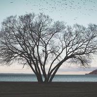 La historia del Árbol Brócoli y un nuevo ejemplo de cómo la fotografía puede impactar sobre un lugar