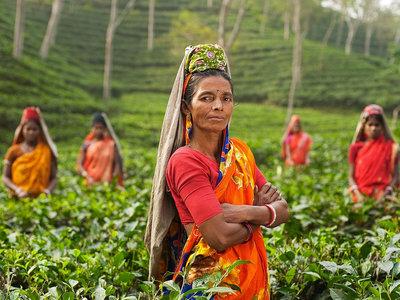 Así es como La India ha plantado 66 millones de árboles en sólo 12 horas